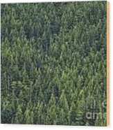 Canadian Boreal Forest. Wood Print