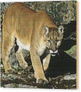 Canadian Cougar Wood Print