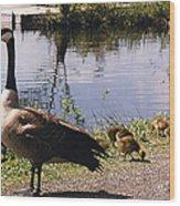 Canadian Geese At Trojan Lake Ny Wood Print