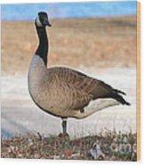 Canadian Goose 2 Wood Print