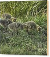 Canadian Goose Gosslings Wood Print
