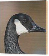 Canadian Goose Wood Print by Joanna Johnson