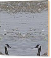 Canadian Goose Symmetry Wood Print