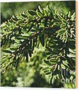 Canadian Hemlock Tips Wood Print