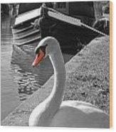Canal Swan Wood Print
