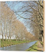 Canal With Tree Wood Print