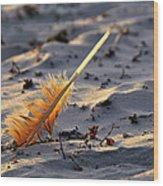 Canaveral National Seashore Wood Print