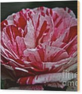 Candy Cane Rose Wood Print
