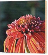Candy Corn Cone Flower Wood Print