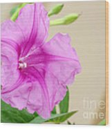 Candy Pink Morning Glory Flower Wood Print
