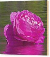 Candy Pink Rose  Wood Print