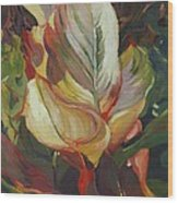 Canna In Light Wood Print by Elizabeth Taft