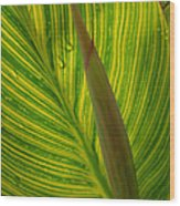Canna Leaf Wood Print by Peg Toliver