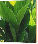 Canna Lilly Wood Print by Susan Saver