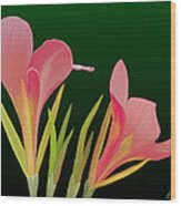 Canna Lilly Whimsy Wood Print by Rand Herron