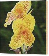 Canna Lily 1 - Maui - Hawaii Wood Print
