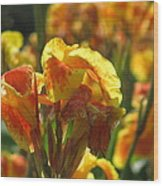 Canna Lily Wood Print