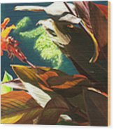 Canna Lily And Water In San Angelo Civic League Park Wood Print by Louis Nugent