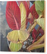 Canna Lily Fall Colors Wood Print