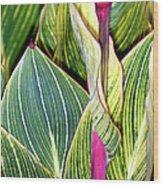 Canna Lily Foliage Wood Print