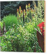 Canna Lily Garden Wood Print by Gretchen Wrede