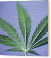 Cannabis Leaf Wood Print