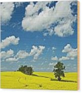 Canola Field And Clouds, Rathwell Wood Print
