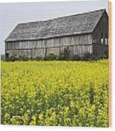 Canola Field And Old Barn Wood Print