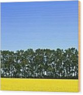 Canola Field And Trees Wood Print