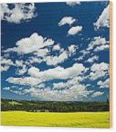 Canola Field, Brookfield, Prince Edward Wood Print