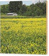 Canola Field Wood Print
