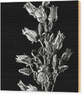 Canterbury Bells In Black And White Wood Print