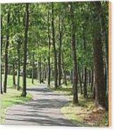 Cape Cod Walking Path Wood Print