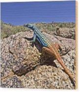 Cape Flat Lizard  South Africa Wood Print by Piotr Naskrecki