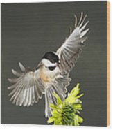 Cappy Hammering The Coneflower Wood Print