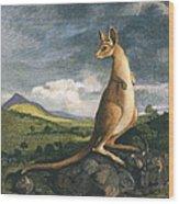 Captain Cook: Kangaroo, 1773 Wood Print