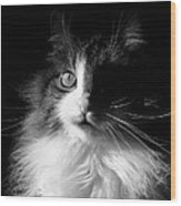 Captivated Cat - A Tribute Wood Print