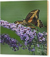 Captivating Swallowtail On Butterfly Bush Flower Wood Print