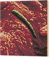 Carbonate Glob Of Meteorite Wood Print