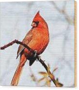 Cardinal 2 Wood Print