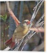 Cardinal 4 Wood Print