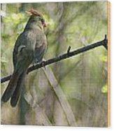 Cardinal 5 Wood Print