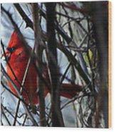 Cardinal And Thorns Wood Print