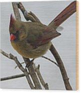 Cardinal Cold Winter Stare Wood Print