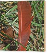 Cardinal Feather Wood Print