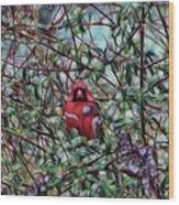 Cardinal Feb 2012 Wood Print