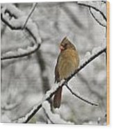 Cardinal Female 3652 Wood Print