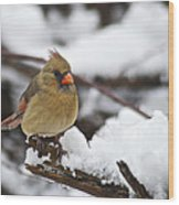 Cardinal Female 3679 Wood Print