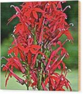 Cardinal Flower Full Bloom Wood Print