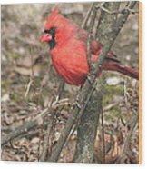 Cardinal In A Bush Wood Print